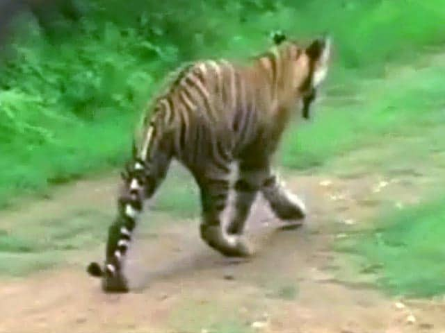 Video : The Sariska Story