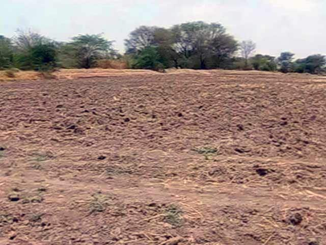 Video : Gujarat Farmers Hope for Rains, Government Prepares for Drought