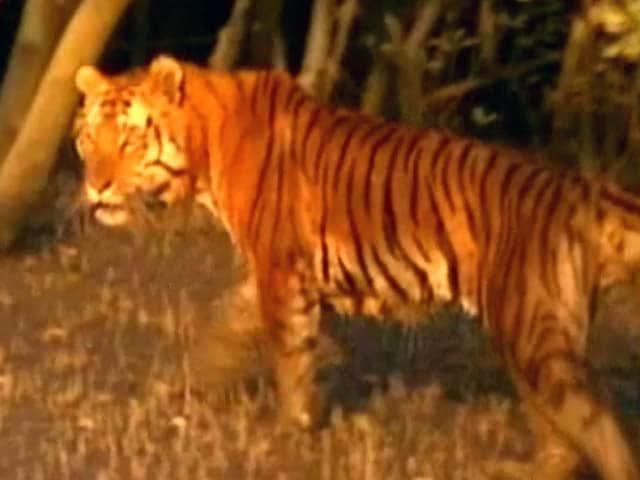 Video : Deciphering the Sundarbans