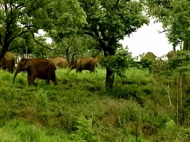 Video : Sathyamangalam Tiger Reserve and Its Challenges