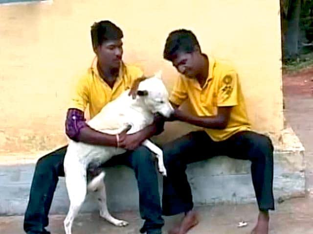 Video : Save the Dog, Save the Tiger