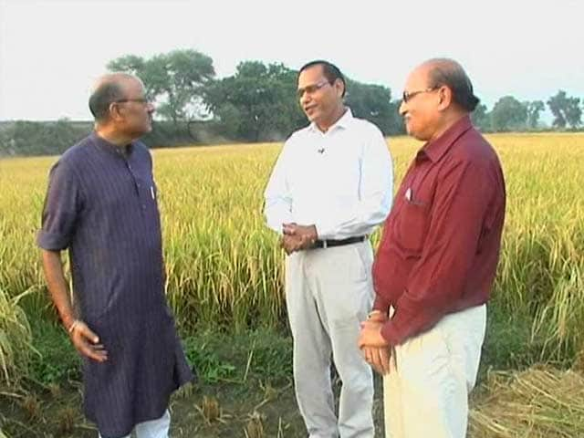 Video : Walk The Talk With Developers of Pusa-1509 Rice