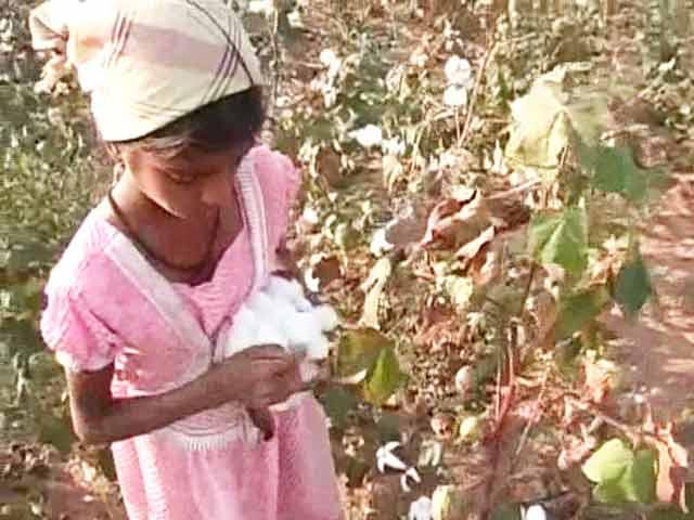 Video : In Telangana, School-Going Children Turn Farm Labourers