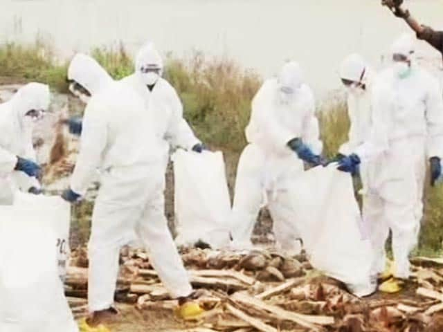 Video : Bird Flu: Kerala Begins Culling, But Contaminated Surroundings Remain A Worry
