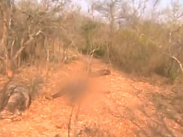 Video : 20 Shot Dead in Andhra Forests: NDTV Reports From Encounter Site