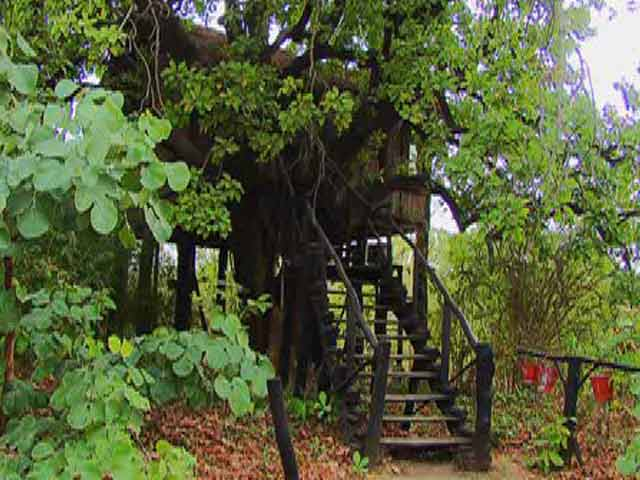 Video : Bizarre Stays: Wild Stay in Madhya Pradesh