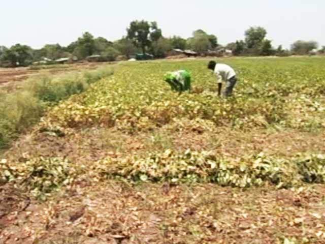 Video : In Madhya Pradesh, Heat Wave Kills 10, Cripples Businesses
