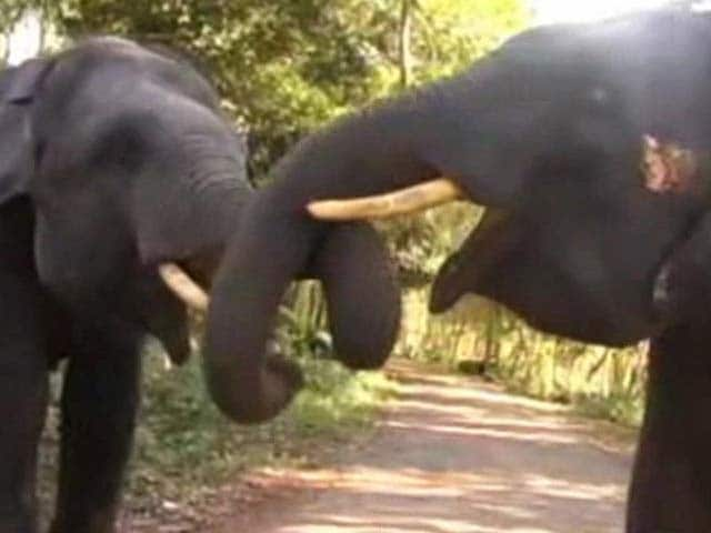Video : For Elephants, A Hospital to Call Their Own in Kerala