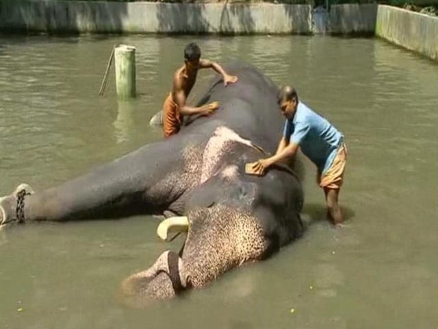Video : Body Scrubs to Indulgent Diets, 40 Elephants to Get Special Treatment in Kerala