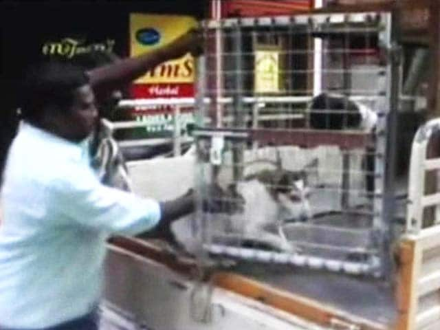 Video : Local Group Announces Reward for Killing Stray Dogs in Kerala