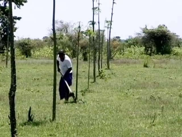 Video : How Assam's Forest Man is Helping Save Trees