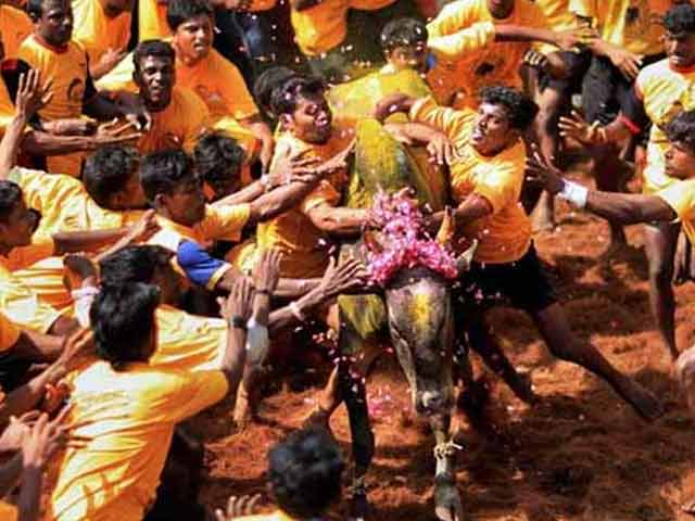 Video : Angry Jallikattu Supporters Threaten To Boycott Tamil Nadu Polls