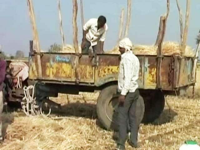 Video : Lost Crops Because Of PM Modi's Rally, Alleges Madhya Pradesh Farmer