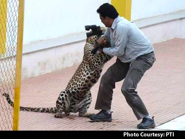Video : Bengalaru School Closes After Leopards Spotted Again Near Campus