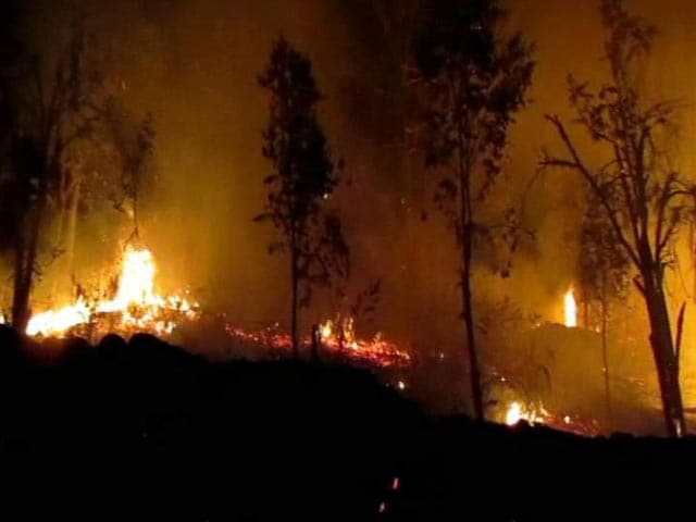 Video : 1 Arrested For Forest Fires Around Kodaikanal In Tamil Nadu