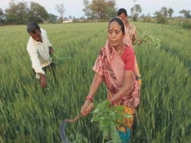Video : Madhya Pradesh Farmers Await Crop Insurance Relief
