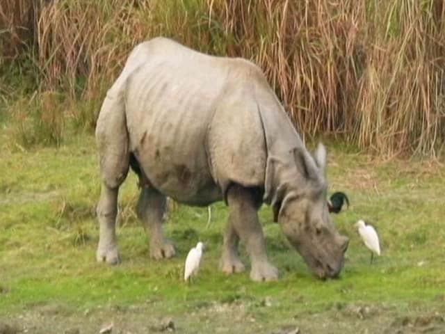 Video : Is the Future of Kaziranga National Park Secure?
