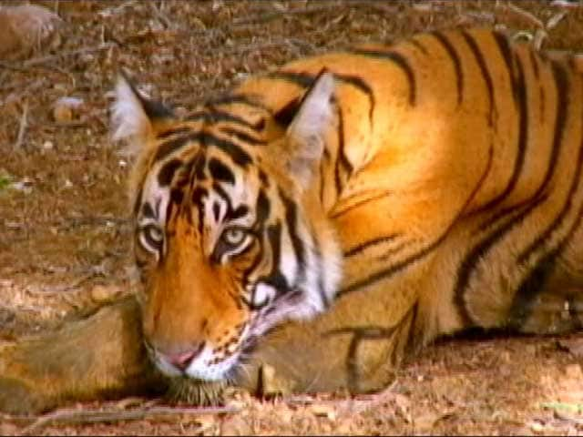 Video : BR Hills: The Only Tiger Reserve to House Indigenous Community