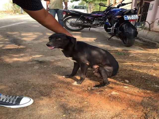 Video : Bengaluru Woman Arrested For Allegedly Killing 8 Puppies