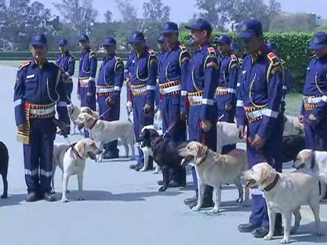 Video : 30 Labradors Inducted In Delhi Police Dog Squad