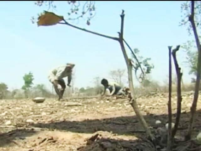 Video : As NREGA Funds Slow Down, Top Court Questions Centre Citing Drought