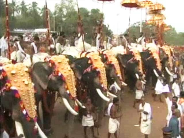 Video : Elephants Keep Up Thrissur Pooram Tradition, Black Paint Masking Injuries
