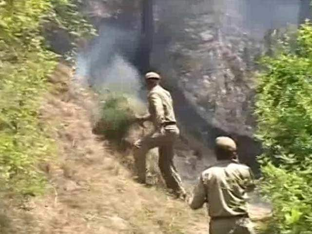 Video : How Himachal's Ill-equipped Fire Fighters Are Dousing Forest Fires