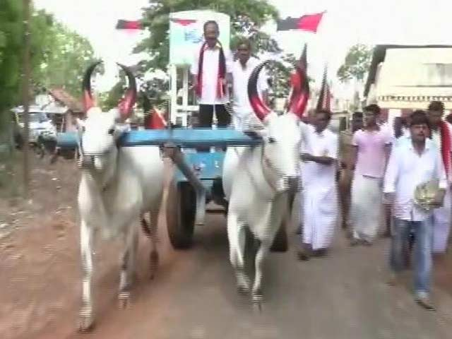 Video : Why Karunanidhi's Youngest Son Is Riding Bullock Cart