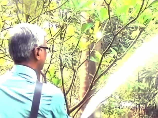 Video : Rainwater Harvesting: Thane Residents Show The Way