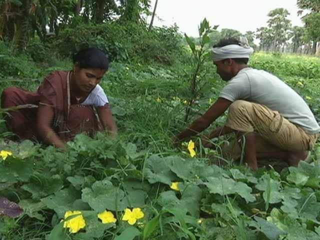 Video : Why More And More Women Take To Farming, But Remain Invisible