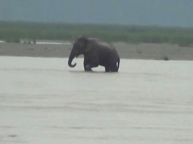Video : Elephant Stranded In Teesta River Canal at Bengal's Jalpaiguri