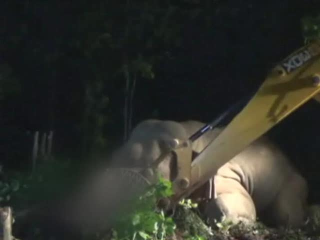 Video : After Search With Drones, Officers Forced To Shoot Dead Elephant