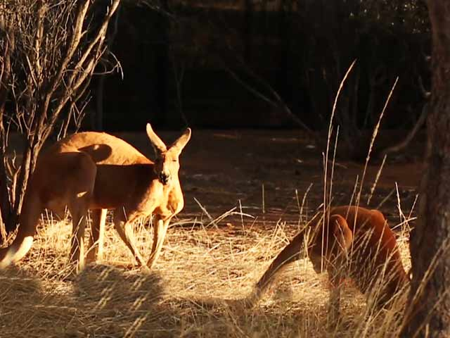 Video : Discover Alice Springs, One Of Australia's Most Famous Outback Towns