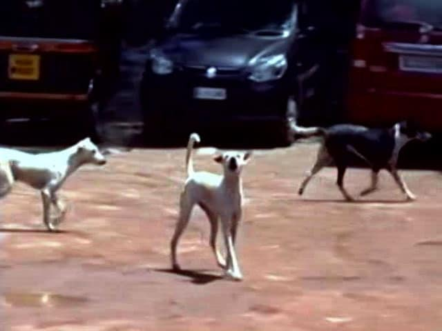 Video : Another Person Hospitalised After Being Bitten By Stray Dog In Kerala