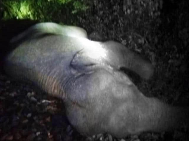 Video : 3 Elephants Run Over By Passenger Train In West Bengal