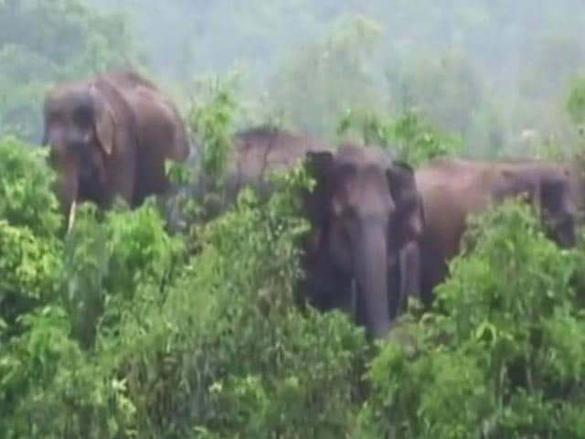 Video : 8 Elephants Trapped In An Island In Baitarani River In Odisha