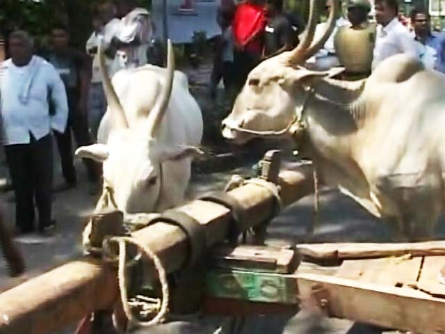 Video : Bullock Carts, Burning Tyres On Karnataka Highway In Cauvery Protests