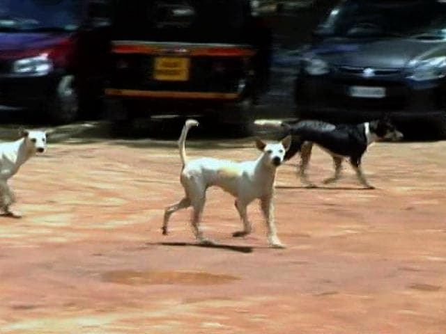 Video : 30 Stray Dogs Killed In Kerala A Day After 90-Year-Old Man's Death