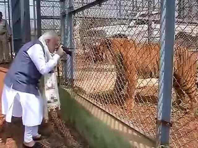 Video : PM Modi's Close Encounter At Jungle Safari In Chhattisgarh