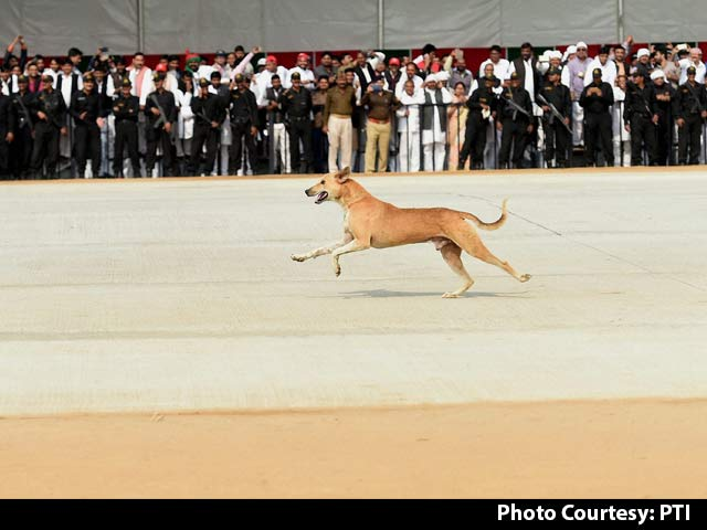 Video : Stray Dog Problem During Jet Landing On New Agra-Lucknow Expressway
