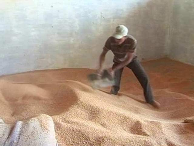 Video : Bhopal Farmers Hit Hard After Centre Scraps Import Duty On Wheat
