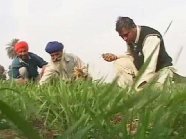 Video : गेहूं पर आयात शुल्क ख़त्म करने के फैसले से किसान निराश