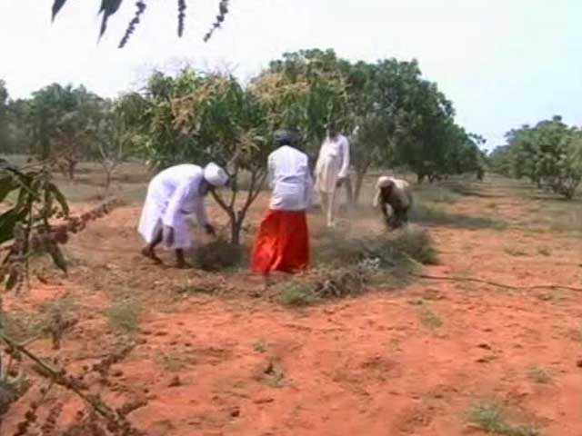 Video : In Tamil Nadu, Sikh Farmers Turn Barren Land Into Orchards
