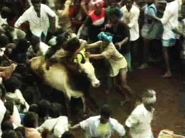 Video : For Jallikattu In Pongal, Panneerselvam Asks PM Modi To Issue Executive Order