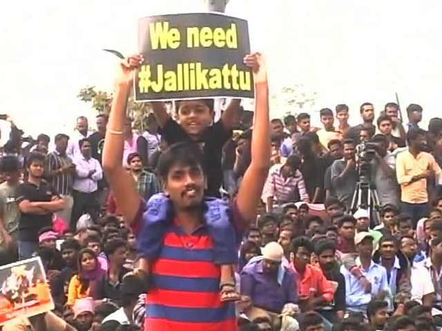 Video : After 48-Hour Jallikattu Protest, A Deadline Has Gone, Over To Chief Minister