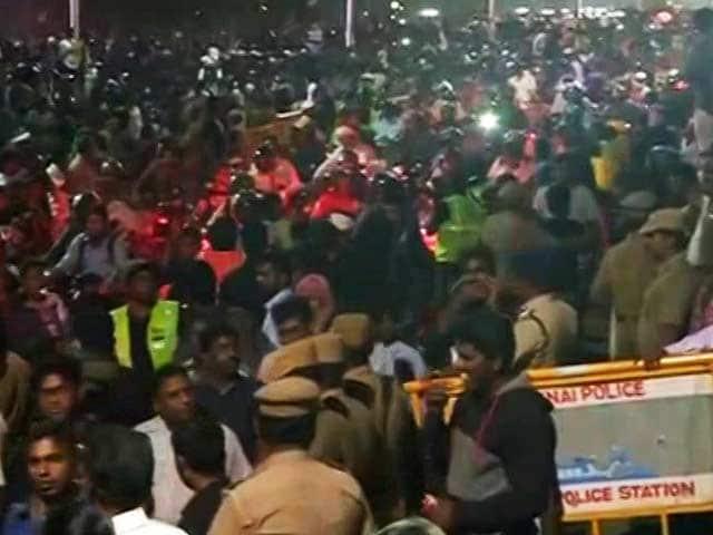 Video : At Chennai's Marina Beach, Thousands Still Protesting For Jallikattu