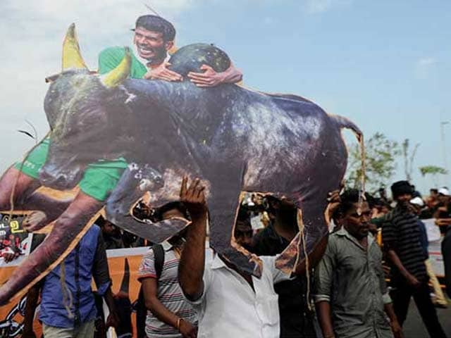 Video : Order Allowing Jallikattu Moves Up The Ranks To The President