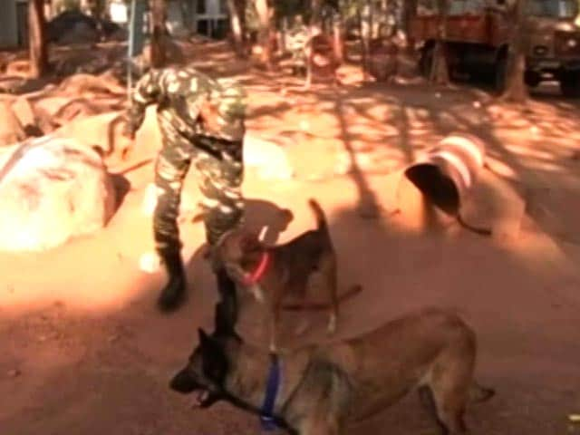 Video : Indian Dogs Now Part Of Bomb Disposal Squad In Bastar