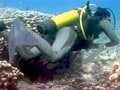 Video: Underwater - The Hidden Truth: India's coral treasures (Aired: June 2008)