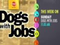 Meet the dogs with jobs - Ben, Jonah and Koby